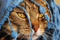 Картинка красивое котэ, накидка, нос, глаза