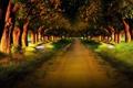 Картинка дорога, лес, деревья, природа, путь, тропинка