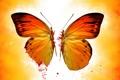 Картинка обои, половина, бабочка, крылья, свет, половинка