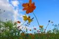 Картинка небо, трава, облака, макро, цветы, лепестки
