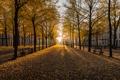 Картинка Nederland, Golden Hour, Hague
