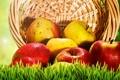 Картинка трава, корзина, яблоки, желтые, красные, фрукты