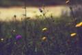 Картинка лепестки, трава, цветы