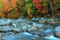 Картинка осень, лес, деревья, река, камни, поток, пороги