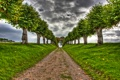 Картинка деревья, HDR, дорога, аллея