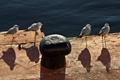 Картинка вода, птицы, чайки, причал