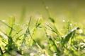 Картинка зелень, трава, капли
