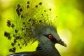 Картинка макро, птица, перья, клюв