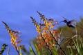 Картинка небо, трава, цветы, птица, колибри