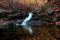 Картинка лес, осень, река