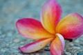 Картинка цветок, макро, лепестки
