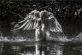 Картинка вода, птица, розовая цапля
