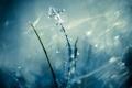 Картинка холод, лед, зима, макро, блеск, травинка, изморозь