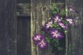 Картинка листья, цветы, дерево, забор