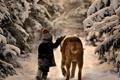Картинка деревья, природа, ребенок, снег, зима, собака