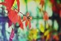Картинка цвета, дерево, забор, настроение осень