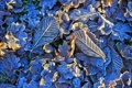 Картинка иней, листья, свет, природа, мороз, кристаллы