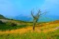 Картинка осень, небо, трава, горы, дерево