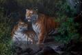 Картинка вода, кошки, ночь, рисунок, хищники, картина, бамбук