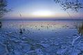 Картинка зима, лес, небо, вода, ветки, озеро, пруд