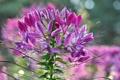 Картинка природа, цветок, соцветие, растение