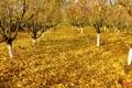 Картинка листья, осень, сад, деревья