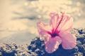 Картинка розовый, цветок, лепестки