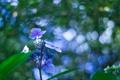 Картинка цветок, макро, синий, боке