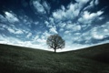 Картинка зелень, небо, трава, облака, деревья, природа, дерево