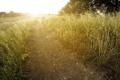 Картинка дорога, поле, солнце