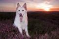 Картинка закат, друг, взгляд, собака
