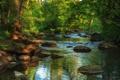 Картинка лес, река, камни