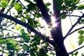 Картинка зелень, лето, свет, ветки, дерево