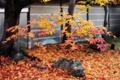 Картинка осень, деревья, камни, листва, Япония, клен