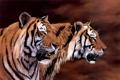 Картинка арт, тигры, Jonathan Truss