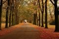 Картинка дорога, осень, листья, деревья, прохожие