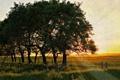 Картинка поле, свет, деревья, пейзаж
