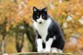 Картинка осень, листва, черно-белая, Кошка, сидит, желтая, боке