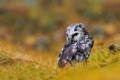 Картинка иголки, ветки, птица, мохноногий сыч