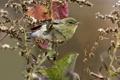 Картинка листья, птица, ветка, перья, клюв