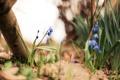 Картинка трава, цветы, лепестки, синие
