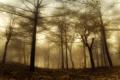 Картинка природа, лес, магия, дымка