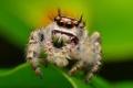Картинка паучок, насекомое, лист, боке