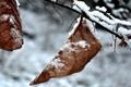 Картинка зима, листья, макро, природа, фото, зимние фотографии