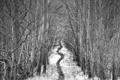 Картинка лес, ч/б, тропинка, by Robin de Blanche, Alley