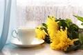 Картинка цветы, окно, чашка
