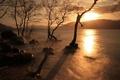 Картинка закат, деревья, озеро, природа