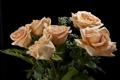 Картинка букет, розы, черный фон