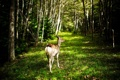 Картинка лес, природа, косуля