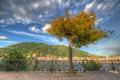 Картинка дерево, Италия, набережная, Italy, озеро Комо, Ломбардия, Комо